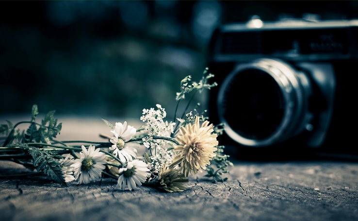 camera and flowers 2